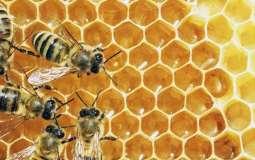 O pszczołach murarkach